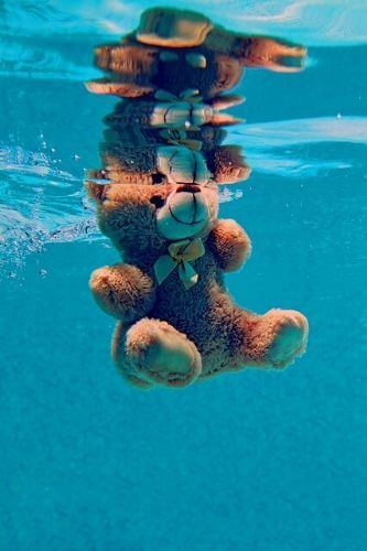 A teddy bear floating in a swimming pool is a strong reminder to follow new pool fence regulations in Victoria.